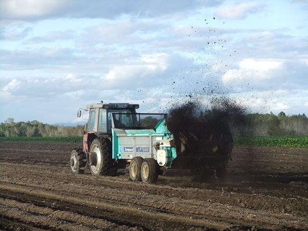 いよいよ小麦畑のオーナー制度が始まります