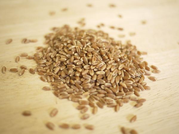 小麦の種(玄麦)