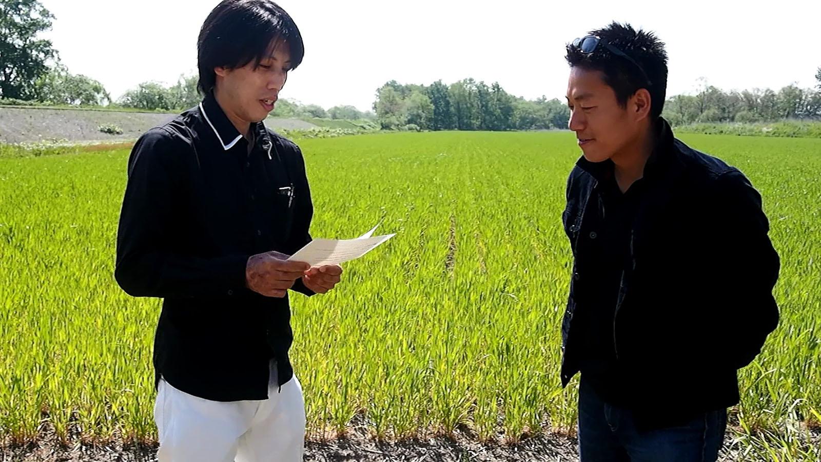 小麦畑でインタビューをしてきました