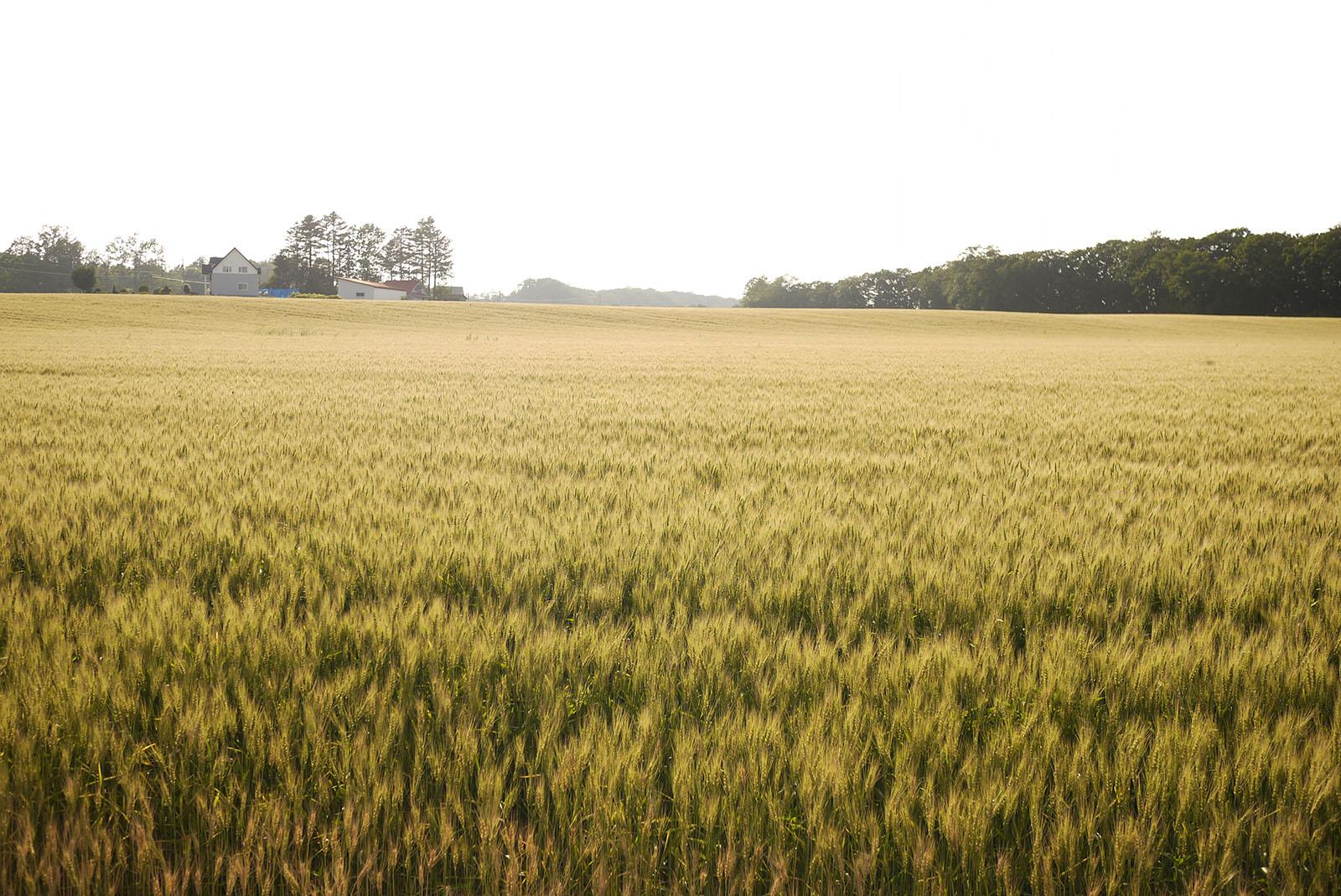 小麦畑のパートナーシップ2020について